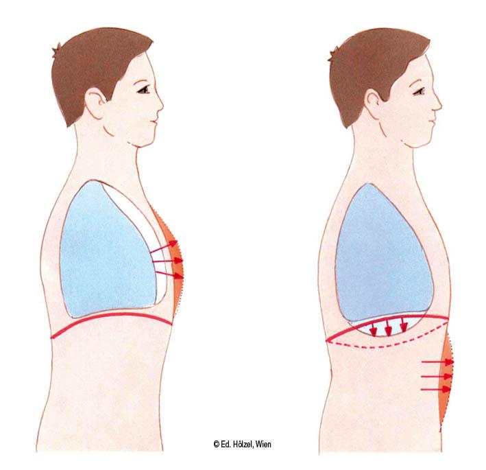 Brust Und Bauchatmung